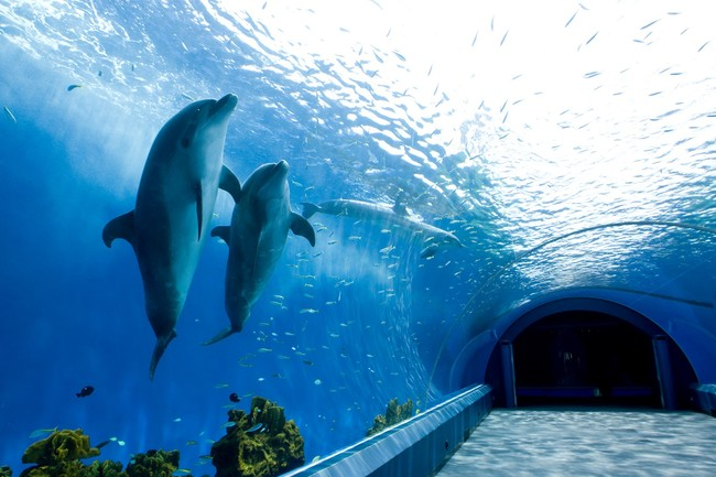 【横浜・八景島シーパラダイス】のマイクロツーリズム!魅力ある「近場旅」
