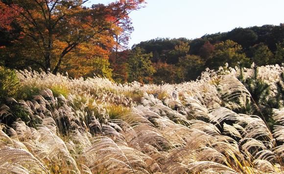 【都立狭山公園】東京の里山・狭山丘陵の魅力を旅して体験!