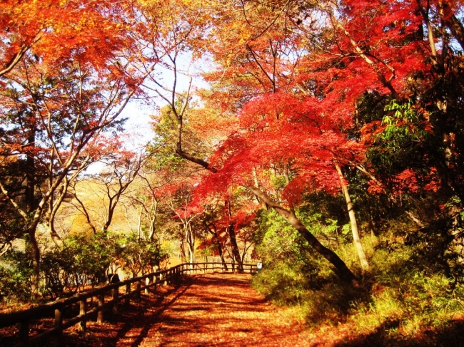 都立狭山公園