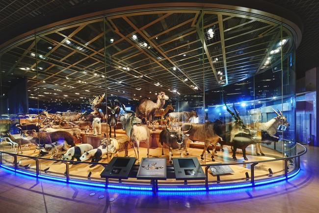 国立科学博物館 「ドコモ×国立科学博物館 XRで楽しむ未来の展示」